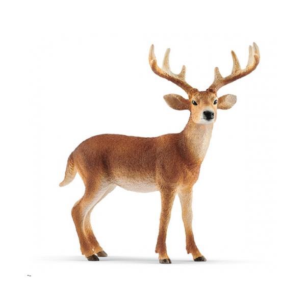 [교구] 슐라이히 - 흰꼬리 수사슴